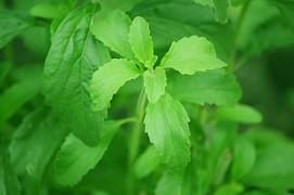 Stevia, todo lo que necesitas saber sobre este endulzante sustitutivo del azúcar