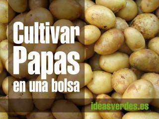 Cultivar patatas en cualquier tipo de bolsa, mínimo espacio