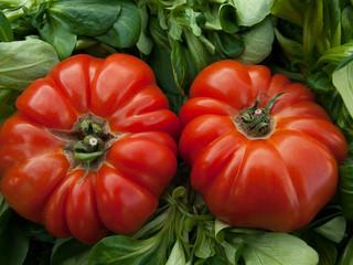 Cómo cultivar tomates ecológicos