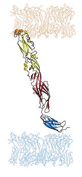 tnc_monomer 1.png