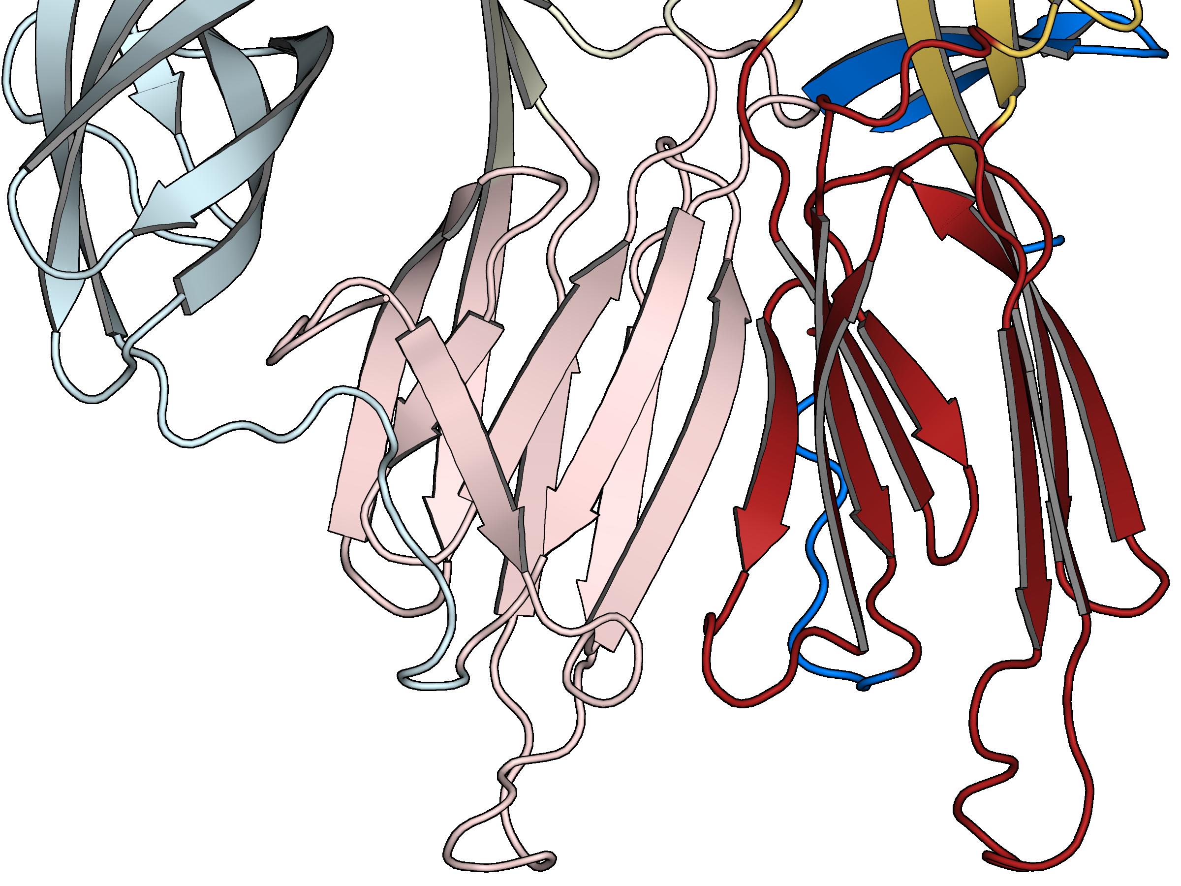 Inter-protomer beta-sheet