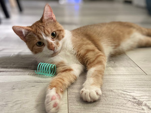 Making a difference through spay and neuter