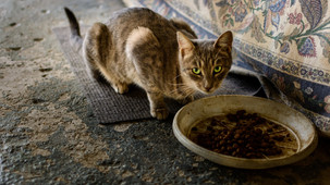 Feed a starving cat this holiday season