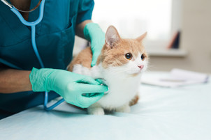 SurreyCats receives $5,000 from PetSmart Charities of Canada to improve access to vet care
