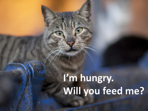 Help feed homeless cats this weekend
