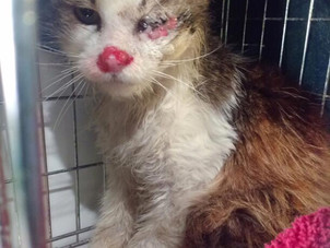 Local group pleas for public's help to prevent the pain and suffering of cats in Surrey