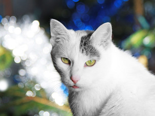 Public asked to help furry friends this holiday season