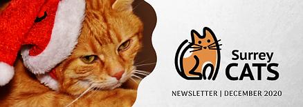 Newsletter Banner Dec 2020.png