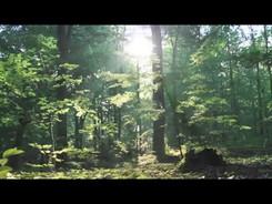Dalsan Yormayalım Ağaçları
