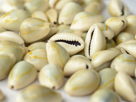 The History of the Cowrie Shell in Africa – and its Cultural Significance