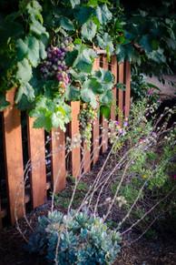 Vineyard Designer