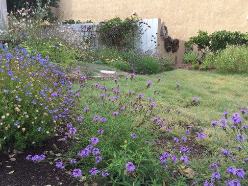 Natural Meadow Landscape Design in Carlsbad