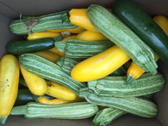 Summer Squash from Home Garden