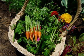 Harvest from Home Garden Design
