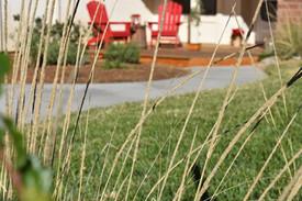 Low Water Lawn Design in Poway
