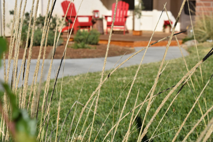 Low Water Lawn Design in Poway