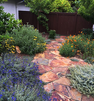 Natural Landscape Design in La Jolla