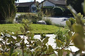 Drought Tolerant Lawn Landscape Design