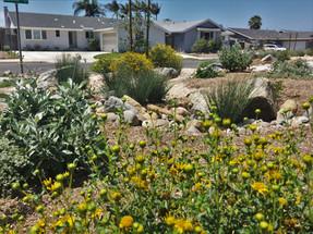 Native Plant Landscapeing