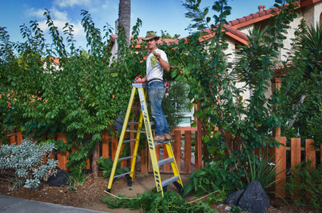Edible Landscape Design in University City, San Diego