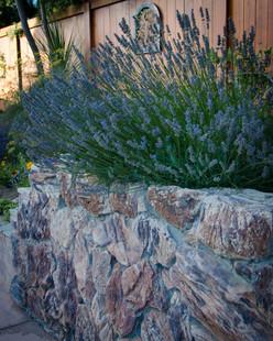 Stone Wall & Flowering Lavender