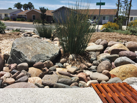 Drought Tolerant Landscape Design in University City