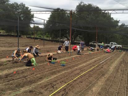 Urban Farm Designer San Diego
