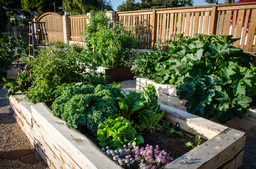 Edible Landscaping San Diego