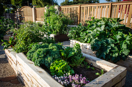 Edible Landscaping San Diego