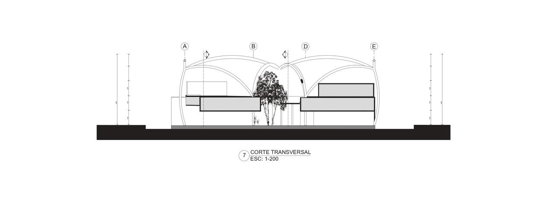 Corte transversal.jpg