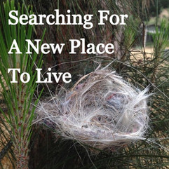 Searching For A New Place To Live