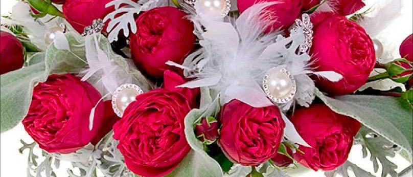 Feathered Garden Roses