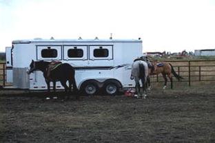 horsesattrailer.jpg