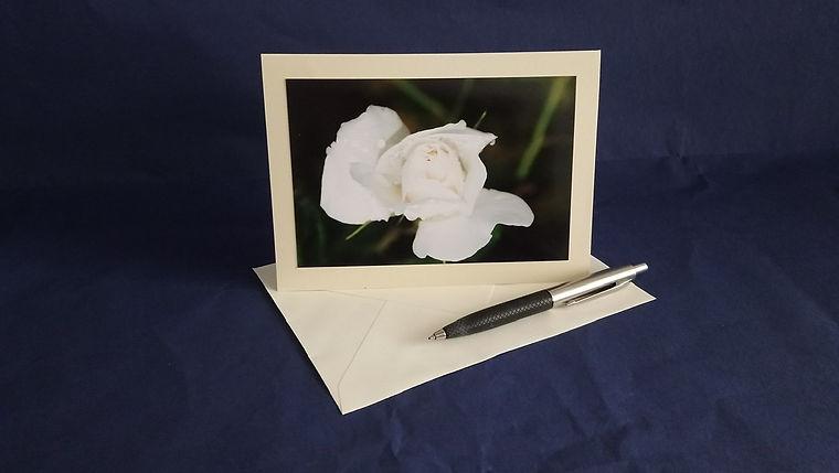White rose - blank card