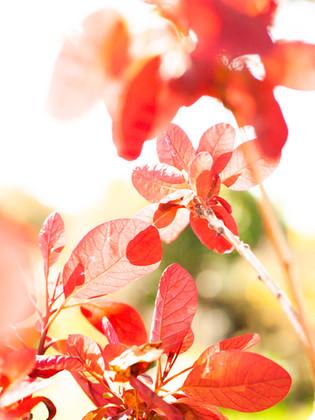 vegetaux2-9.jpg