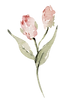 dusty roses (6).png