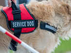 What Does A Service Dog Vest Mean?