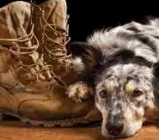 How a PTSD Dog Can Help Veterans Suffering From PTSD