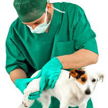 5 Best Hip And Joint Products For Dogs