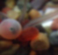 Fish in egg_Cape Horn Skye.jpg