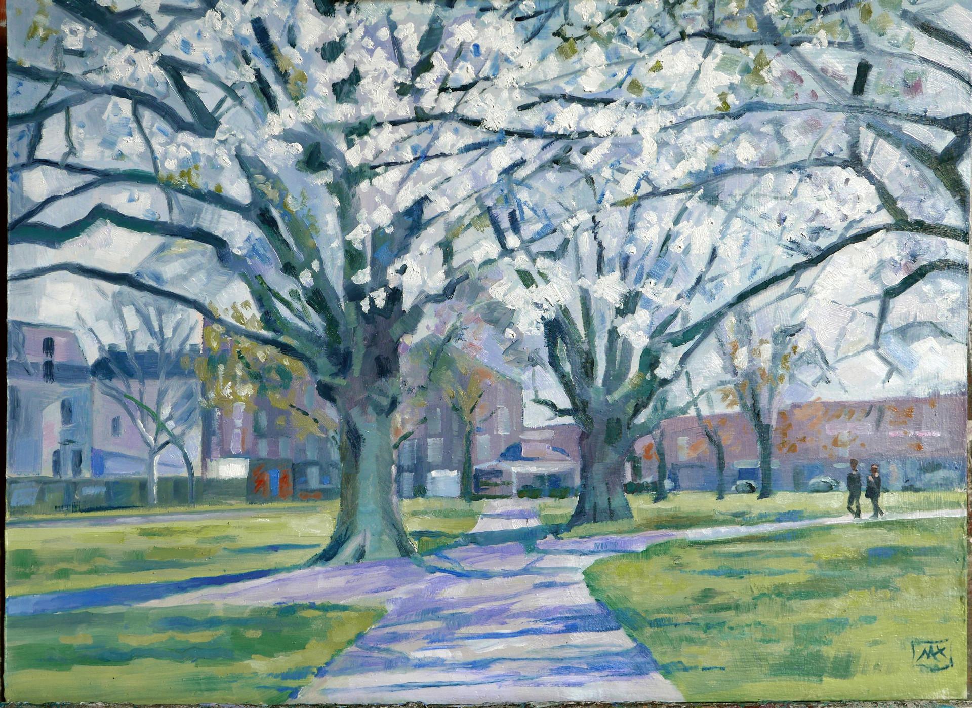 Eelbrook Common in Spring