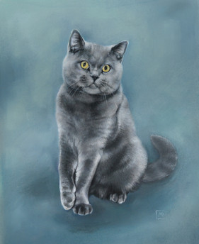 Scottish Straight Pussycat
