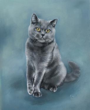 Indigo the cat