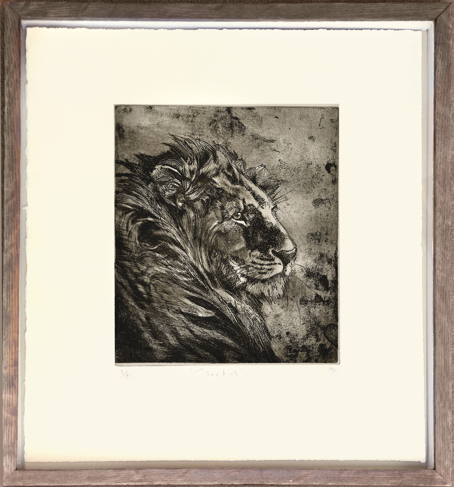 African Lion Etching
