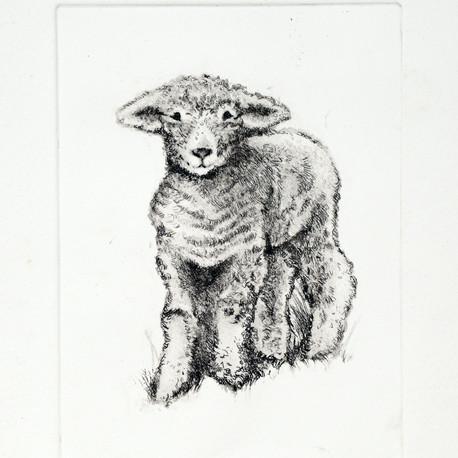 Lamb Etching