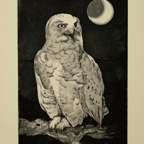 Snowy Owl Etching