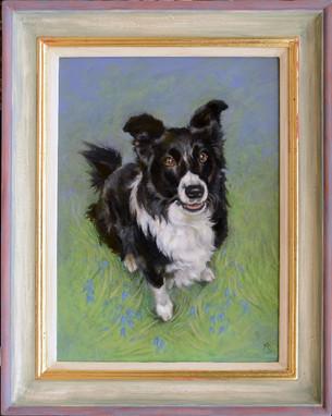 Collie Sheepdog