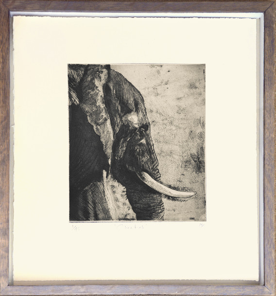 African Elephant Etching