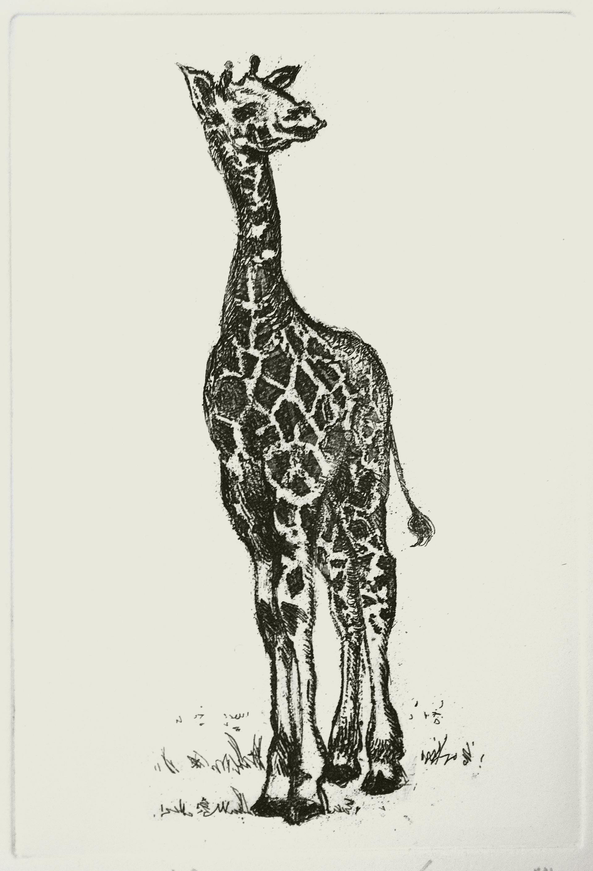 Baby Giraffe Etching