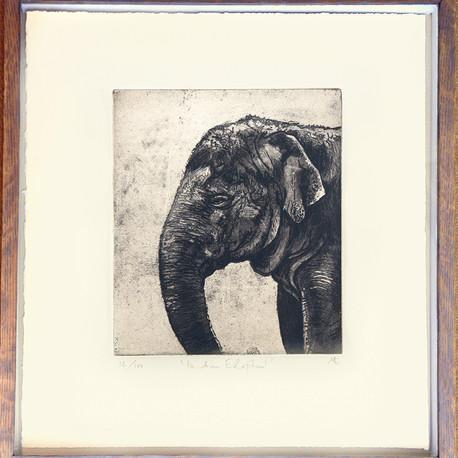 Indian Elephant Etching